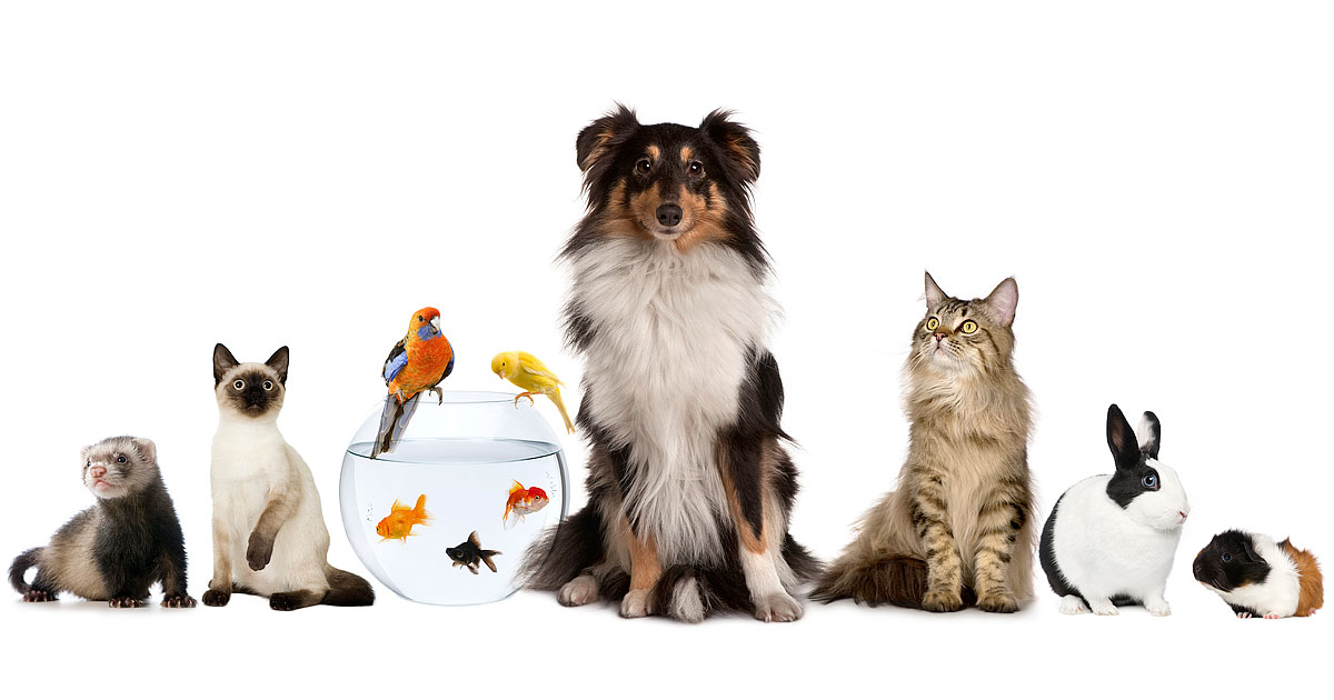 Добрая аура домашних животных