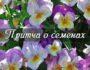 Любовь подобна цветам, притча семена