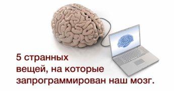 Наш мозг запрограммирован на определенные вещи