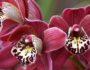 Орхидея в доме приметы и суеверия