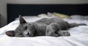 Почему нужно каждое утро застилать кровать?
