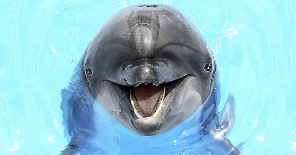 Сколько раз в день нужно смеяться?