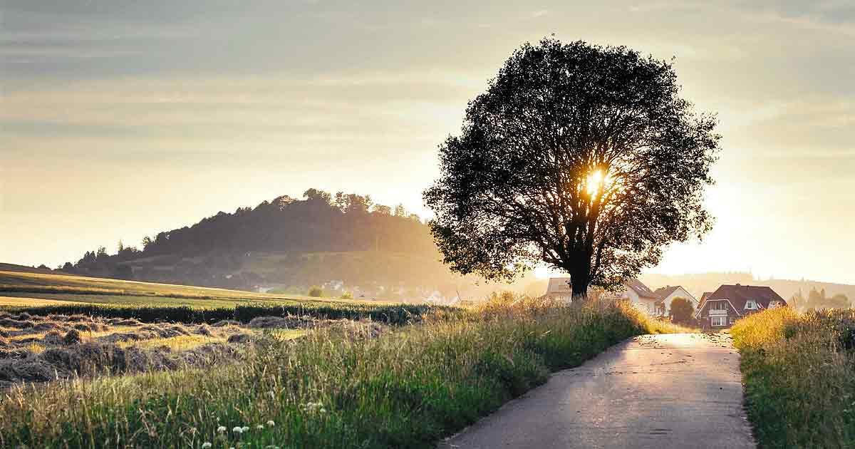 Как полюбить жизнь и стать оптимистом?
