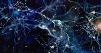 Ученые открыли каналы коммуникации в мозге, излучающие свет