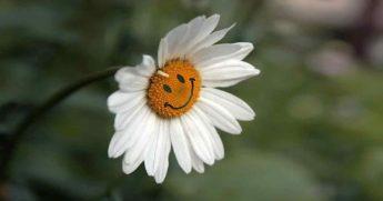 Быть добрым полезно: доброта для души то же, что здоровье для тела