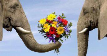 Цветочный этикет. Кому какие цветы нужно дарить?