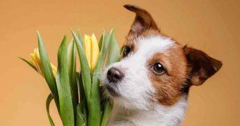 Как общение с животными благоприятно влияет на наше здоровье?