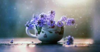 Комнатные цветы и растения предскажут что ждет вас завтра